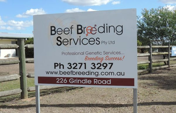 Beef Breeding Services Brisbane